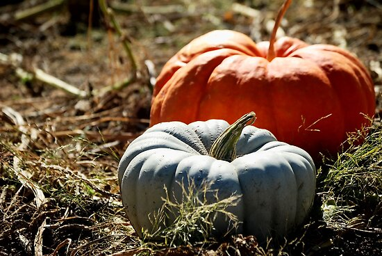 Gray and Orange Pumpkins by HeavenOnEarth