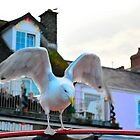 Crazy Seagull, New Quay by melek0197