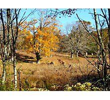 New York Autumn Photographic Print
