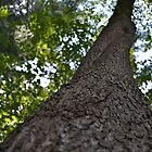 Looking Up a Tree by PhosGraphe