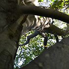 Through the Branches by PhosGraphe