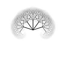 Mighty Tree Photographic Print
