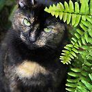 Missy, Behind the Fern by heatherfriedman