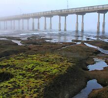 Tide Pools by Barbara  Brown