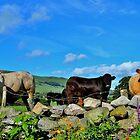 Cows by melek0197