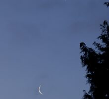 Crescent Moon and Venus by Sue Robinson