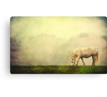 White Pony on  Misty Morning Canvas Print