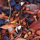 Blueberries for the Birds by Karen Jayne Yousse