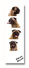 Funny Pug Dog Photo Booth by Edward Fielding
