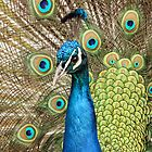 Peacock - iPhone Case by Mark Hughes