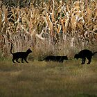 Cats in the Cornfield by AngieBanta