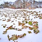 Winter before fall by Brian Avery