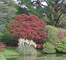 Autumn colours at Sheffield Park by Keith Larby
