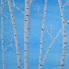 Birch Trees at Noon by Pamela Burger
