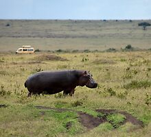 Hippopotamus on the Masai Mara by Sue Robinson