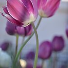Floriade by gertiw