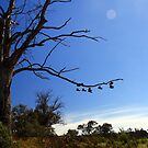 Shoe Tree by Asoka