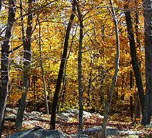 Autumn Woods, New York by Alberto  DeJesus