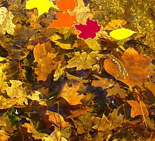 Autumn leaves by Alberto  DeJesus
