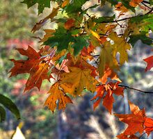 Fall Oak Leaves Brighten by bannercgtl10