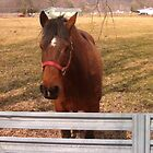 Nice Brown Horse by a Fence by dww25921
