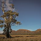 Cazneaux Tree by Rosie Appleton