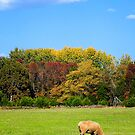 Autumn Grazing by Sharon Woerner