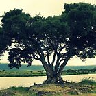 Tree of Skulls ( The Waterhole )  by emiliewho