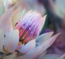 Abundance.... by Sharon House