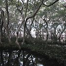 Swamp trees by footsiephoto