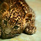 Baby Leopard by Daniela Pintimalli