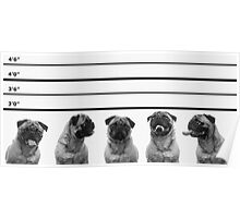 Police Line Up Poster