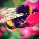 Bumble Bee by Ollie Chanter