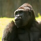 Female Gorilla by fg-ottico