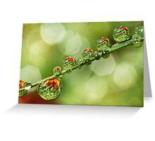 Autumn Dew Drops Greeting Card