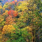 AUTUMN ALONG NEWFOUND GAP ROAD by Chuck Wickham