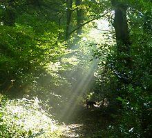 Sun Rays by suemac