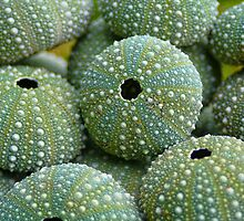 Sea Urchin Shells by Heike Richter