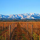 Winter in Marlborough by Heike Richter