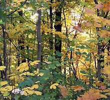 Jefferson Memorial Forest III, near Louisville, Kentucky  by Richard J. Bartlett