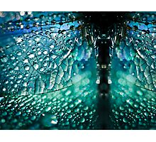 Born A Dragonfly Photographic Print