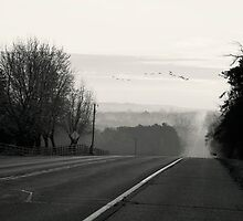 Foggy Migration by KBritt