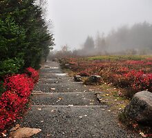 Jordan Pond Path by Lyana Votey