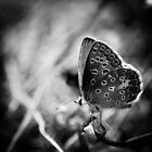 Black and white butterfly by Mirko Chessari