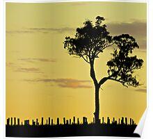 Sunset Vineyard 1 Poster