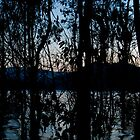 Eildon Morning by Alex Evans