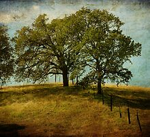 Trees on a Hill by Susan  Kimball