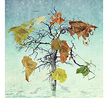 Earth Tree (The Beginnings) Photographic Print