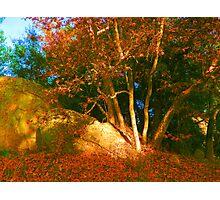 Autumn's Calling Photographic Print