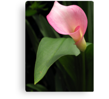 Another Pink Lilly Canvas Print